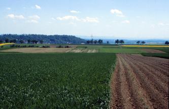 Das Foto zeigt eine auf- und absteigende Ackerlandschaft. Links ist eine große Fläche dicht begrünt, rechts laufen Furchen abwärts. Hinten sind weitere Äcker; grün, braun und gelb gefärbt. Bäume, Traktoren und eine bewaldete Höhe ergänzen das Bild.