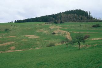 Von einer grünen Wiese geht der Blick aufwärts auf einen von Rinnen durchzogenen Hang, auf dem sich zwischen dem Grün mehrere braune, vertrocknete Stellen öffnen. Auf der Kuppe des Hanges zeigt sich, nach rechts ansteigend, dichter Wald.