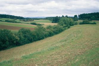Das Foto zeigt einen spärlich bewachsenen Hang, nach links abfallend. Grünes Buschwerk und kleine Bäume schlängeln sich am unteren Ende entlang. Dahinter sind weitere Grünland- und Ackerflächen. Bewaldete Hänge bilden den Hintergrund.