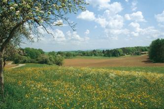 Hinter einer blühenden, mit Löwenzahn durchsetzten Wiese im Vordergrund zeigt sich eine ausgedehnte, leicht wellige braune Ackerfläche. Baum- und Waldstreifen rahmen sie links und zum Hintergrund hin ein.