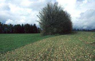 Das Bild zeigt einen sehr steinigen, bepflanzten Acker rechts und flaches Grünland links. In der Mitte trennt eine Baumgruppe und Gebüsch die Böden. Im Hintergrund ziehen sich Waldstreifen entlang.