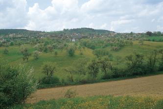 Hinter blühendem Grün und einem hellbraunen Ackerstreifen, der nach rechts hin ansteigt, sind gewölbte grüne Hügel aufgetürmt. Auf den Baumbewachsenen Kuppen breitet sich eine Ortschaft aus. Im Hintergrund mittig und links sind weitere, bewaldete Hügel.