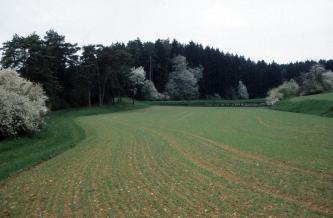 Das Bild zeigt eine gewundene, begrünte Ackerfläche. Links und rechts begrenzt leicht ansteigendes Grünland den Acker, bewachsen mit Hecken und Bäumen. Im Hintergrund verläuft ein begrünter Steinriegel sowie ein dunkler Wald.