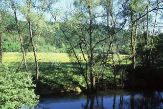 Der Blick geht über einen im Vordergrund sichtbaren Fluss zum dahinter sanft ansteigenden Ufer sowie einer Wiese. Das dunkle Blau des Wassers kontrastiert dabei mit dem dunkel- bis hellgrünen Bewuchs von Ufer und Wiese. Schlanke Bäume begleiten den Fluss.