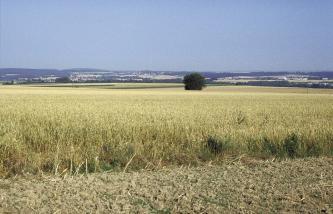 Das Bild zeigt großflächige, gelbgrüne Getreidefelder. Im Vordergrund ist ein Streifen mit hellbraunen, nackten Erdschollen. Am eben verlaufenden Horizont durchziehen Waldflächen die Ackerlandschaft.