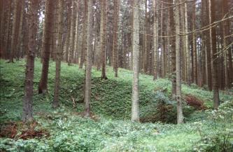 Das Bild zeigt eine von schlanken Nadelbäumen umstandene, ovale Vertiefung inmitten eines dichten Waldes.