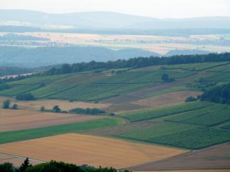 Blick von oben auf von rechts nach links geneigte Rebflächen, an die sich flache Äcker anschließen. Im Hintergrund sind bewaldete Hänge, Siedlungsstreifen sowie mehrere Höhenzüge erkennbar.