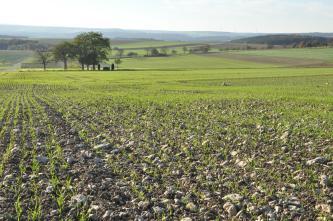 Das Bild zeigt flachwellige, zum großen Teil frisch begrünte Ackerflächen, die bis zum Horizont reichen. Im Vordergrund sind auch Steine zwischen den Pflanzen erkennbar. Im Hintergrund verlaufen bewaldete Höhenzüge.