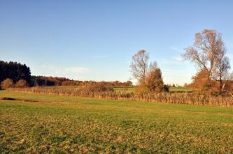 Das Bild zeigt flache Wiesen, die durch Streifen von Gebüsch und Bäumen sowie einem schmalen Graben getrennt sind.