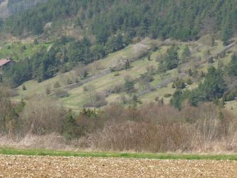 Blick auf einen im Mittelgrund liegenden, nach rechts aufsteigenden, teilweise bewaldeten, teilweise offenen Hang mit mehreren aufgeschichteten Steinhügeln. Im Vordergrund ist ein hochliegender, steiniger Acker erkennbar.