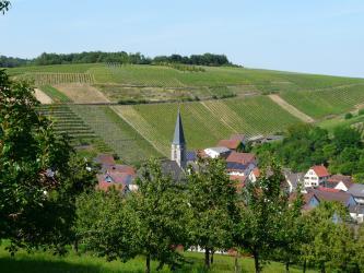 Blick über eine Obstbaumwiese auf gegenüberliegende Rebflächen. Unterhalb des Weinberges breitet sich eine kleine Ortschaft aus.