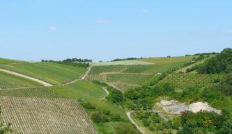 Das Bild zeigt verschiedene, nach rechts und links ansteigende Rebflächen. Rechts mischt sich Baumbestand zwischen die Reben, unten ist zudem offener Fels zu erkennen.