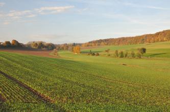 Blick über flache, nach links und rechts leicht ansteigende, teils begrünte, teils braune Äcker, die im Mittelgrund durch einen schmalen Graben sowie eine Straße getrennt werden. Im Hintergrund schließen sich Waldstreifen an.