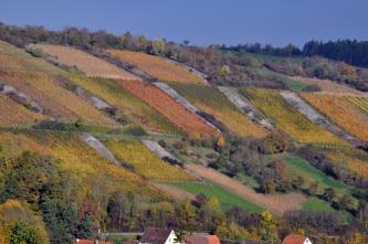 Das Bild zeigt einen nach links aufsteigenden Hang mit zahlreichen Weinbauflächen. Dazwischen sind auch große Steinriegel sowie Baumgruppen verteilt.
