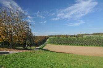 Blick auf eine zum Hintergrund hin ansteigende, durch einen Fahrweg getrennte Landschaft, in der sich links Obstbäume, rechts dagegen Wiesen, Äcker sowie eine Baumschule zeigen.