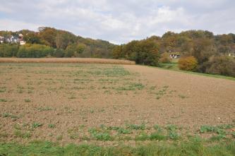 Das Bild zeigt links einen hellbraunen, nur mit wenigen Grünpflanzen bedeckten Acker. Am rechten Rand dieses Ackers ist ein mit Gehölz bewachsener Graben erkennbar. Im Hintergrund, von links nach rechts, zieht sich Wald.