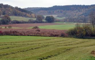 Im Vordergrund dieses Bildes liegt eine gemähte, grüne Wiese. Dahinter quert ein Streifen aus Schilf und Gehölz, ehe sich nachfolgend Acker- und Grünflächen abwechseln. Im Hintergrund erheben sich nach links und rechts teils bewaldete Hänge.