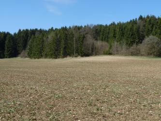 Das Bild zeigt einen flachen, einheitlich gefärbten Acker, der zum Rand eines angrenzenden Waldes etwas heller wird.