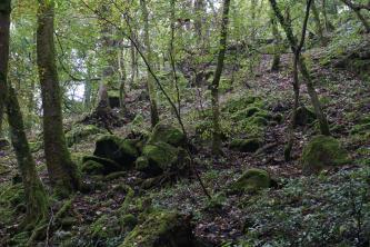 Blick auf einen steil nach rechts ansteigenden Waldhang mit schlanken Bäumen. Im Vordergrund liegen mehrere, mit Moos überzogene kleine Felsbrocken verstreut.