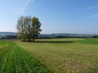 Das Bild zeigt eine kleine, in einer Vertiefung stehende Baumgruppe inmitten einer Grünlandschaft. Im Hintergrund ziehen sich Waldstreifen sowie flache, bewaldete Anhöhen von links nach rechts.