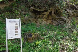 Das Bild zeigt einen von Baumwurzeln überwachsenen Gesteinsaufschluss an einem begrünten Hang. Links davon steht eine bebilderte Hinweistafel.