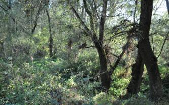 Das Bild zeigt einen von Sonnenstrahlen erhellten Wald mit hohem Gras und schlanken, gebogenen Bäumen rechts sowie dichtem Strauchwerk links.