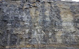 Blick auf eine Steinbruchwand aus hellem, meist grau angewitterten dünnbankigen, teilweise plattigen Kalkstein. Vor der hohen Wand steht ein Maßstab.