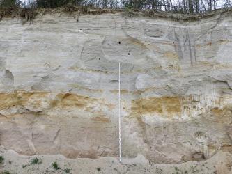 Teilansicht einer Steinbruchwand. Die leicht wellenartig verlaufenden Schichten sind unten grau, darüber weißlich grau. Dazwischen finden sich auch bräunlich gefärbte, teils breite Bänder. In der Bildmitte ist eine Messlatte angelehnt.
