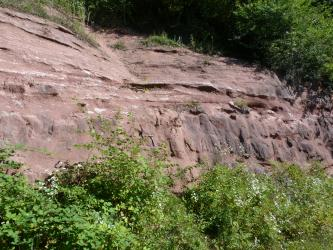 Das Bild zeigt eine Abbauwand einer ehemaligen Abbaustelle. Das anstehende Gestein ist rötlich. Vor und über der Wand wachsen grüne Büsche.