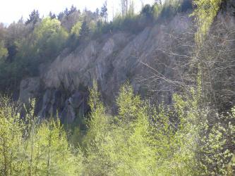 Im Vordergrund des Bildes befinden sich die Kronen von hellgrünen Laubbäumen, dahinter ist eine Steinbruchwand aus grauem Gestein zu sehen. Diese ist am oberen Rand mit Büschen und Bäumen bewachsen.