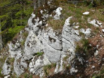 Blick von oben auf eine Felsgruppe, die entlang eines Waldhanges abwärts verläuft. Das weißlich graue Gestein ist gestuft und gerundet, zudem auf der Kuppe und in Zwischenräumen bemoost und bewachsen.