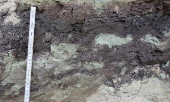 Großaufnahme von weißlichem bis grauem Festgestein und violetten, rissigen Lagen darüber. Rechts sind helle Einschlüsse im dunkleren Gestein sichtbar. Ein Maßstab links zeigt die Größenverhältnisse an.