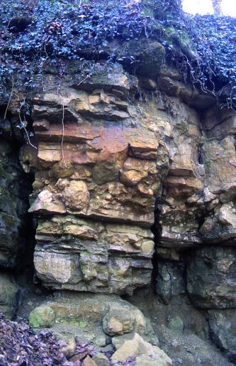 Blick auf eine alte Abbauwand eines Steinbruchs. Das Gestein ist recht heterogen, die Färbung reicht von leicht grünlich über beige zu rötlich und es ist konglomeratisch aufgebaut. Die Wand wird von oben durch Pflanzen überwachsen.