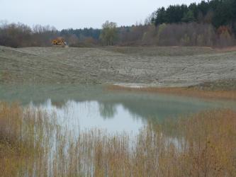 Das Bild zeigt einen Teil einer Tongrube, welcher rekultiviert wurde: Es wachsen Pflanzen auf der ehemaligen Abbaufläche und auf der Abbausohle steht Wasser. Im Hintergrund ist Wald zu erkennen.