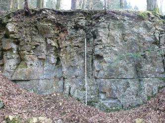 Das Bild zeigt eine Gesteinswand mit grauem, dickbankigem, oben plattig aufgewittertem Gestein. Vor der Wand liegt viel braunes Laub, im Hintergrund oben sind Baumstämme zu erkennen.