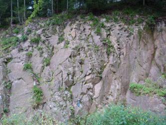 Blick auf eine Aufschlusswand aus rötlich-grauem Gestein. Das Gestein ist bruchhaft deformiert, in den Brüchen wachsen teilweise Pflanzen.