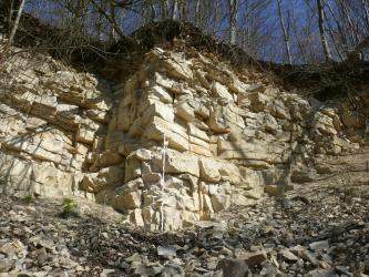 Blick von unten auf eine Abbauwand aus hellgelbem, gebanktem und geklüftetem, feinkörnigem Gestein. Unter der Wand liegt Geröll, über der Wand wachsen Bäume.