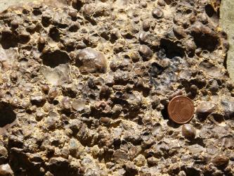 In hellbraunes Gestein sind rundliche Vertiefungen sowie knollige, an Haselnüsse erinnernde Gesteinsstücke eingedrückt. Eine rechts aufgelegte Centmünze dient als Größenvergleich.