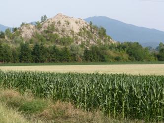 Blick auf bewachsene Haldenreste des Kalisalzbergwerks in Buggingen. Im Vordergrund steht ein Maisfeld.