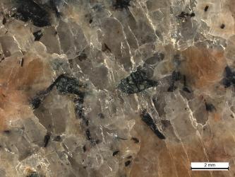 Nahaufnahme eines Gesteins mit rötlichen, rundlichen Mineralen, klaren eckigen und kleinen schwarzen Mineralen. Unten rechts befindet sich ein Maßstab.