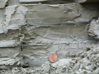 Nahaufnahme eines feinlaminierten, kompakten, mittelgrauen, gebänderten Gesteins. Mittig unten im Bild befindet sich eine Centmünze als Maßstab.