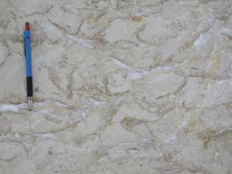 Nahaufnahme von hellgrauem Gestein mit wellenartigen, weißlichen und bräunlichen Einschlüssen. Ein blauschwarzer Kugelschreiber links zeigt die Größenverhältnisse an.