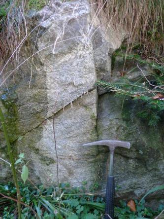 Nahaufnahme eines hellgrauen, massigen und gleichkörnigen Gesteins, welches von Pflanzen eingerahmt wird. Unten rechts steht ein Hammer als Maßstab.