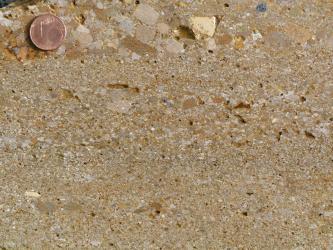 Nahaufnahme eines hellbeigen Kalksandsteins, in welchen Bruchstücke aus ebenfalls hellem Gestein eingeschlossen sind. Links oben liegt eine Münze als Maßstab.