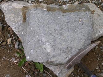 Handstück eines Gesteins, dessen Matrix mittelgrau mit leichtem Lilastich ist. Darin eingesprenkelt befinden sich sehr kleine, weiße Stückchen. Unter dem Handstück ist Erde zu erkennen.