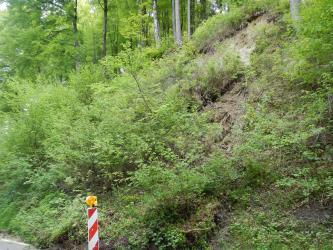 Das Bild zeigt eine steile Böschung am Straßenrand. Sie ist stark überwachsen. An ihrer oberen Kante ist graues bis beiges Lockermaterial aufgeschlossen.