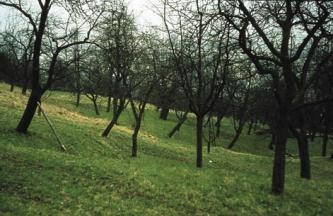 Das Bild zeigt einen sehr welligen grünen Hang mit Trichter und teilweise schief stehenden kahlen Bäumen, von denen einer gestützt wird.