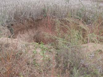 Das Bild zeigt eine schräge Aufsicht auf ein mehrere Meter breites Loch in einem Getreide-Acker.