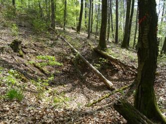 Das Bild zeigt einen Laubwald. Das Gelände ist nach links ansteigend. Zentral befindet sich eine rundliche Einsenkung.