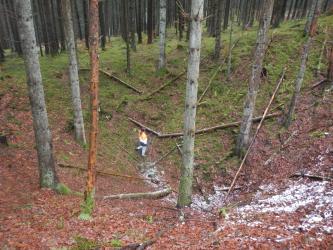 Der Blick richtet sich in einen Nadelwald. Im Vordergrund ist eine tiefe Mulde im Waldboden zu sehen, in er eine Person steht.